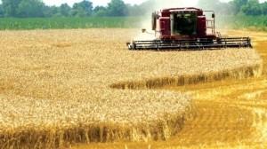 agricultura_1